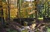 Moreland Hills in Autumn 2