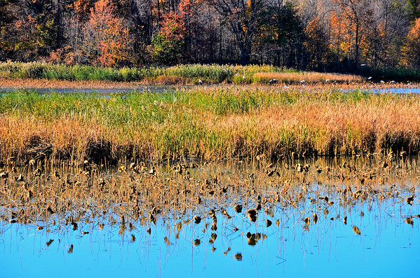 Autumn on Golden Pond