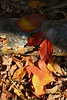 Autumn leaves cluster 2