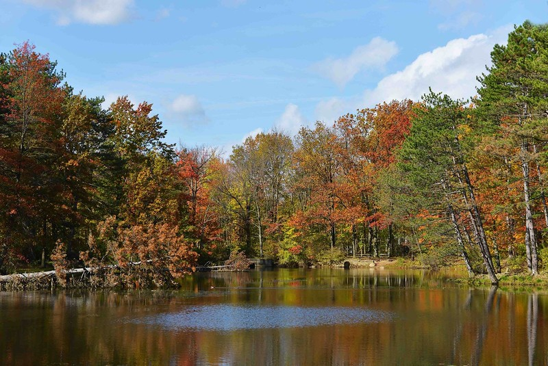Strawberry Pond, North Chagrin Reservation