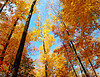 Autumn leaves in blue sky