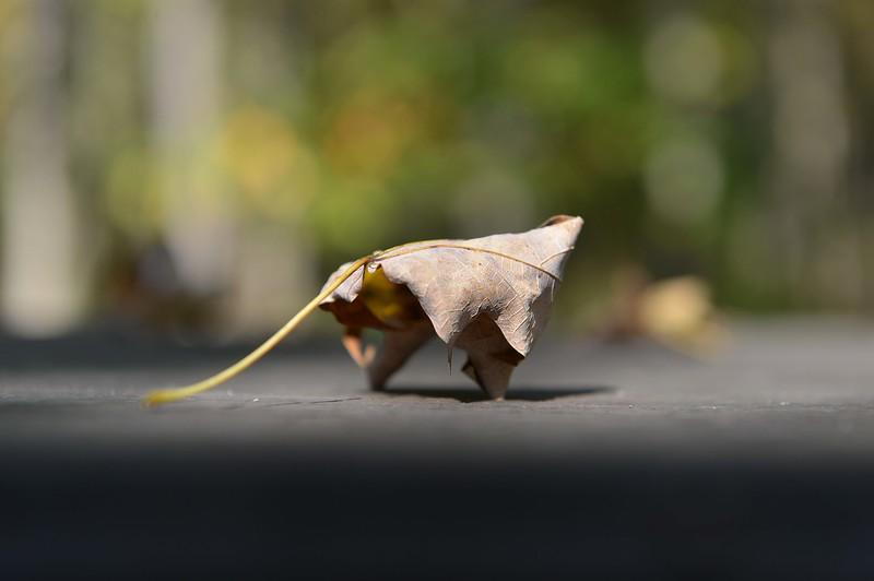 Solitary autumn leaf