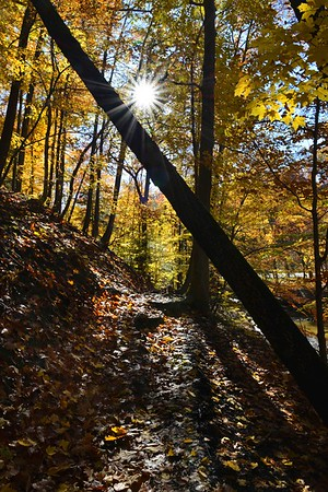 Starred Sun through the Autumn Forest