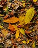 Autumn leaf cluster