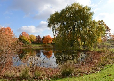 Holden Arboretum in Fall