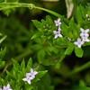 _1100997-Spring Ground flower-sig