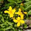 _1110064-Groundflower-Bee-sig
