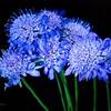 _1110334 Wild flower Blue-DN-sig