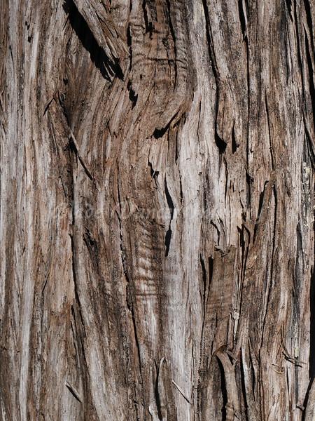 Split Oak Wood