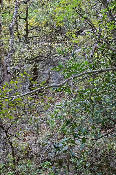 Barton Creek Greenbelt in Austin Texas Oct 2019.