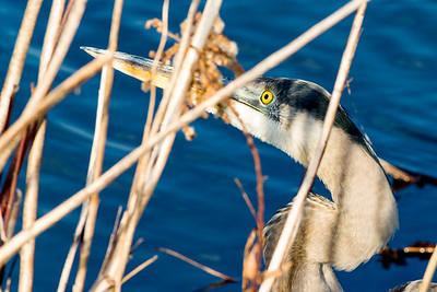 12/27/2018 Lake Artemesia Birds