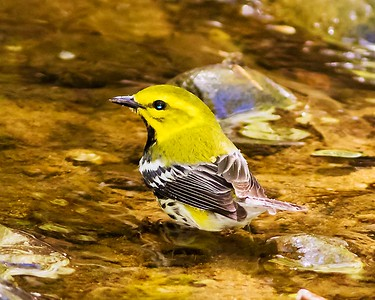 Birds of Alexandria VA