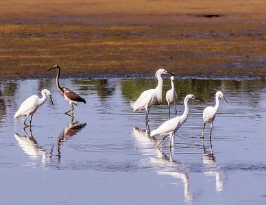 Birds of Chesapeake Bay Environmental Center