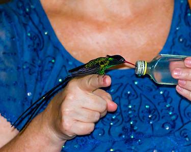 Birds of Jamaica, Rockland Bird Sanctuary