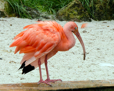 Birds of Orlando