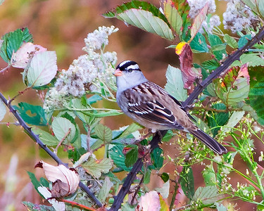 Birds of Patuxent Wildlife Refuge