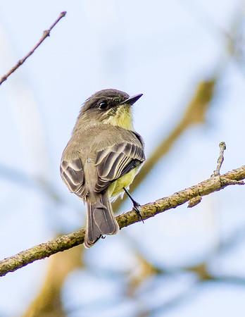 Birds of Rock Creek Park 2017