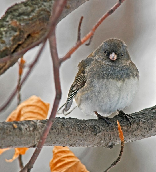 Winter Bird sm.jpg