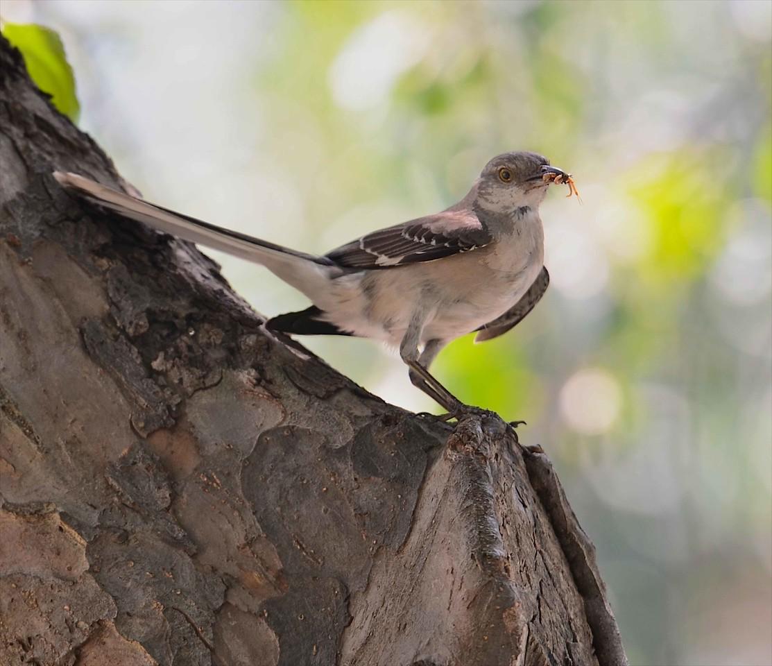 Bird and Grub
