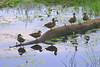 ZO 18 Ducks in a Row