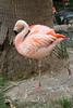 ZO 3 Flamingo