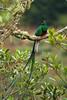 BR 9 Resplendent Quetzal