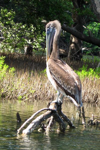 BR 57 Pelican - Closer View