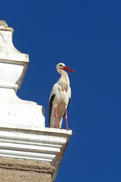 BR 42 Stork Close Up