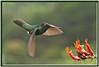 BR 13 Hummingbird