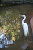 BR 46 Wading Egret