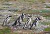 BR 53 Five Marching Penguins (1)