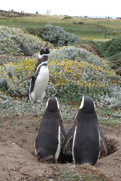 BR 52 Preaching Penguins (2)