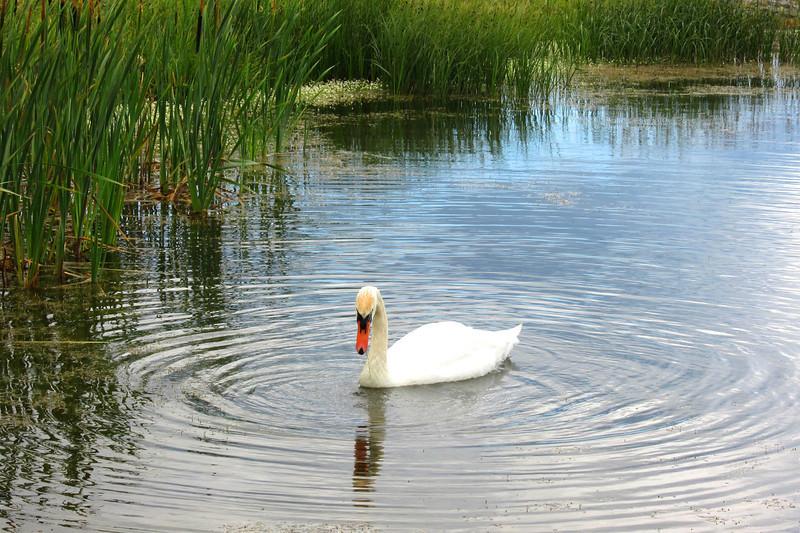 BR 28 Swan
