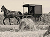 Elderly Amish Man Driving in Buggy