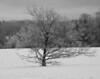Solo Winter Tree