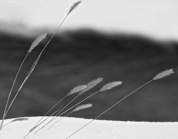 Grass in Winter