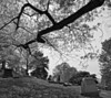 Lakeview Cemetery Scene