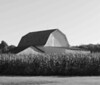 Williams County Ohio Barn