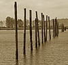 Old Wooden Poles in Water