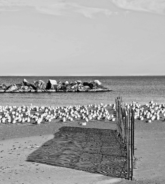 Gulls and Fence Shadow