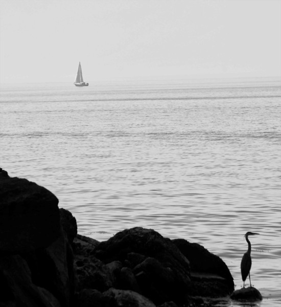 Heron and Sailboat