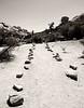 Stone Marked Path in Joshua Tree