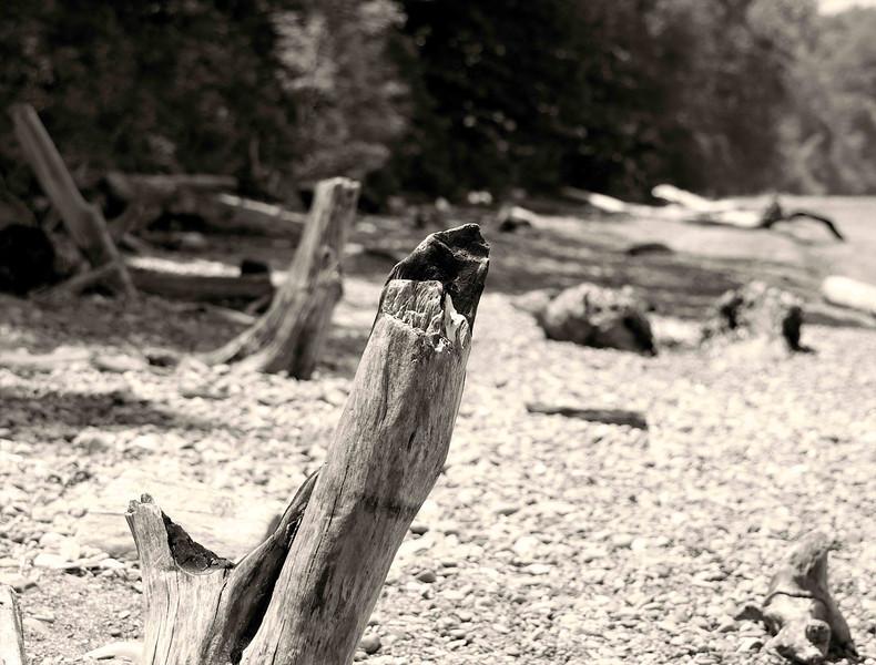 Edgewater Park Drift Wood