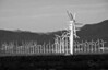 Wind Turbine Farm in Palm Springs