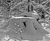 Snowy Stumps
