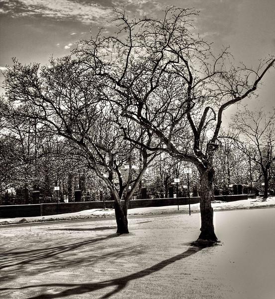 Barren Trees in Winter