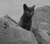 Feral Cats among east 55th Street Park Rocks