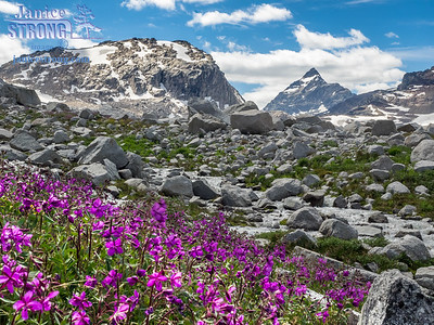 Alpine Fireweed near Thunderwater Lake in the high Purcell Mountains.