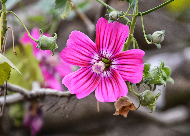 BOV_0020-7x5-Flower