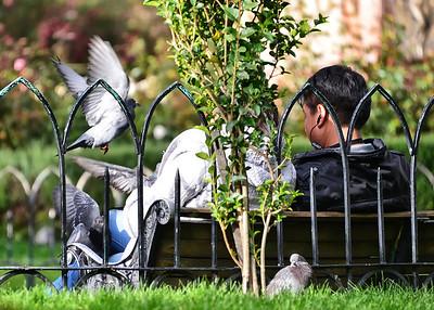 BOV_0179-7x5-Feeding Birds